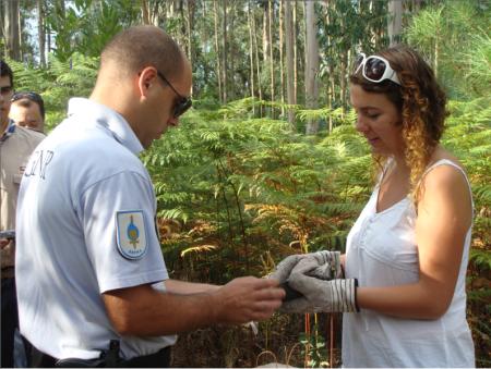 Um elemento do SEPNA ajuda a bióloga a retirar as fitas que prendem as asas do gavião